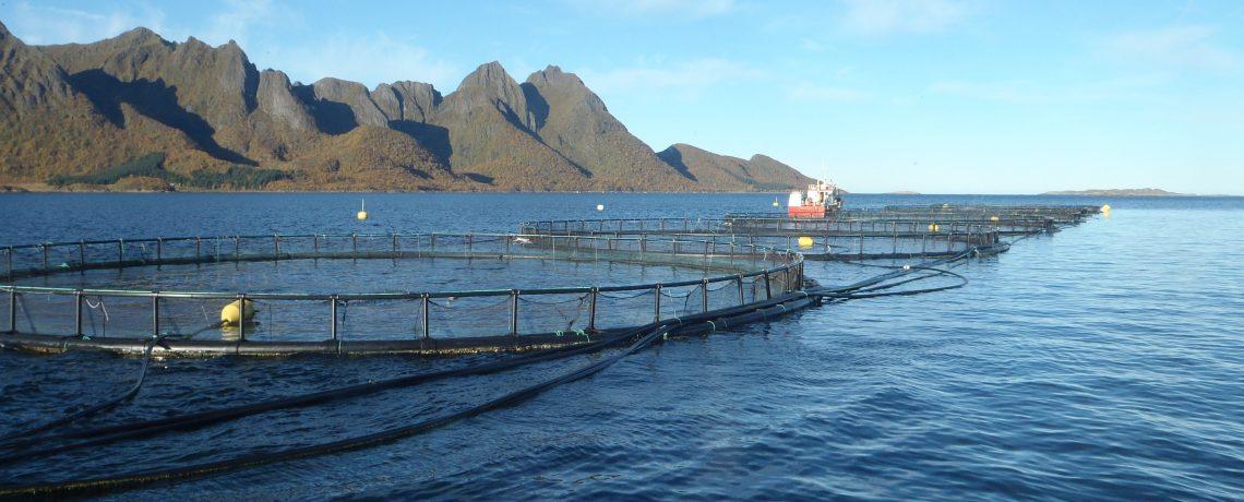 Nettverk fjord- og kystkommuner
