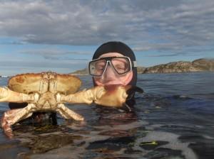 hitrabilde-krabbe